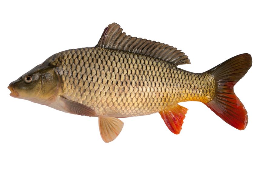 fisketyper norge